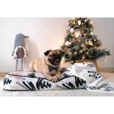 Qushin Noel
